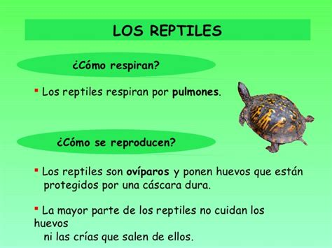 Los animales vertebrados ud5