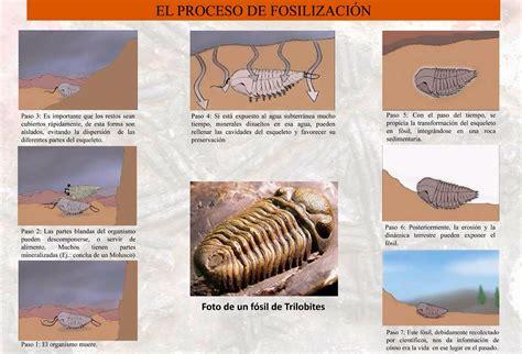 Los Archivos Fósiles: La Memoria de la Tierra | Gori Gori