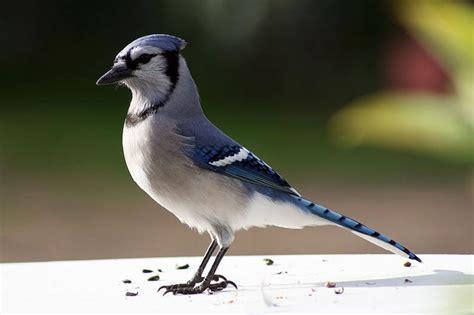 Los azulejos: aves hermosas   Batanga