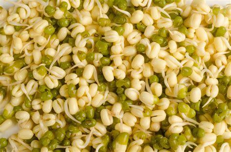 Los beneficios nutricionales de la soja