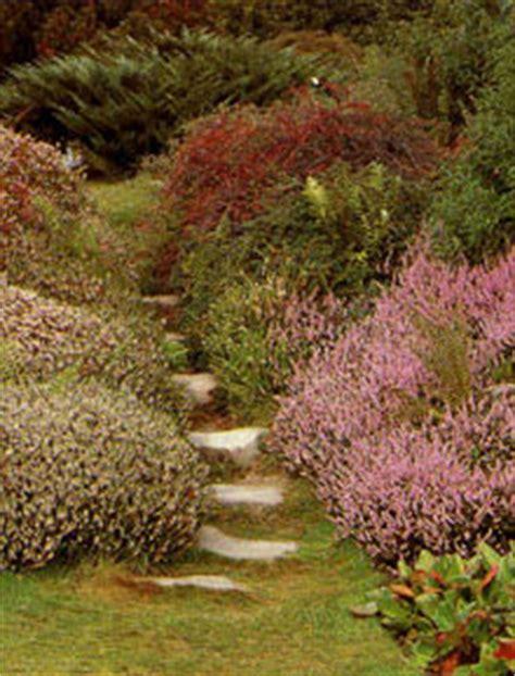 Los brezos en rocalla, macetas, jardineras. macizos, arriates