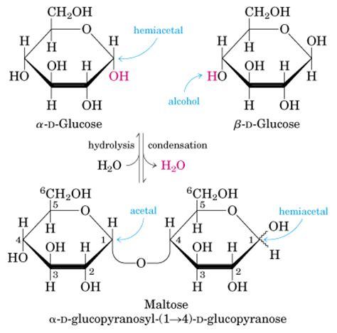 Los carbohidratos, glúcidos o hidratos de carbono, son las ...