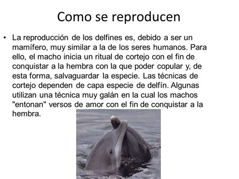 LOS DELFINES. - ppt descargar