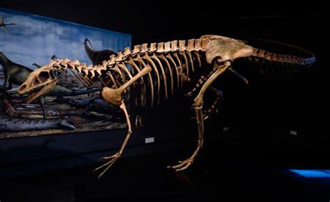 Los DINOSAURIOS: información, tipos, fósiles y más ...