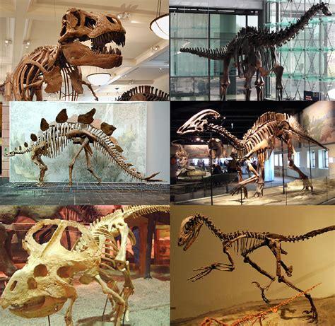 los dinosaurios: introducción de los dinosaurios