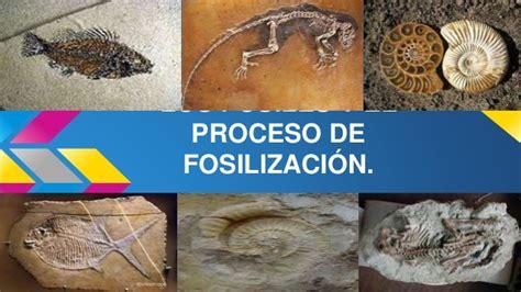 Los fósiles y el proceso de fosilización.