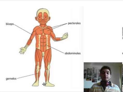 Los huesos y los músculos  segundo grado    Material de ...
