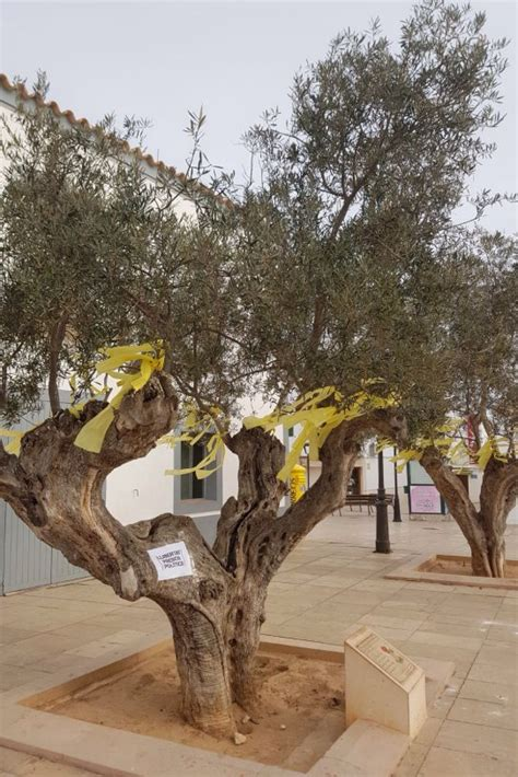 Los lazos amarillos llegan a Formentera