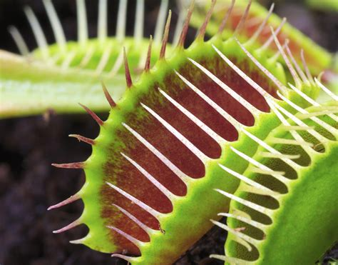 Los más de 15 sentidos de las plantas que ni imaginamos
