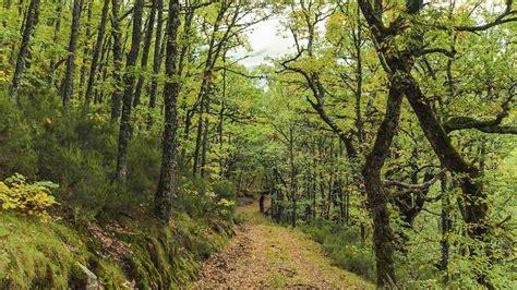 Los mejores bosques para ir de excursión - BUHO