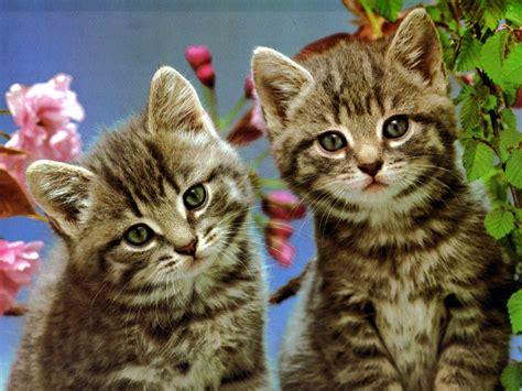 Los mejores fondos de pantalla Gatos Traviesos fondos ...