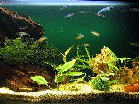 Los mejores peces para el acuario. Elige tu color | Mascotas