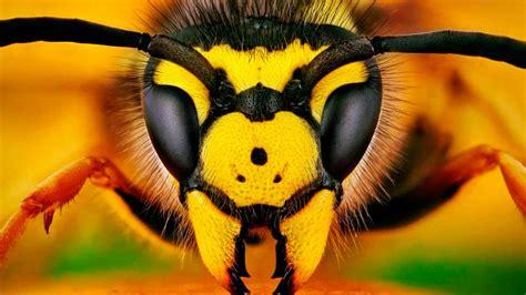 Los mejores repelentes naturales para ahuyentar a las abejas