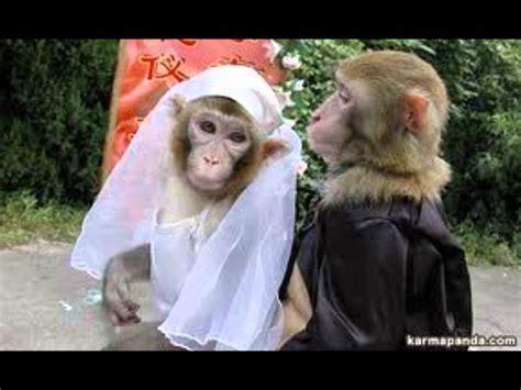 Los monos más graciosos del mundo (tinkiwinki) - YouTube