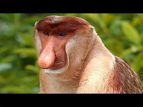Los monos mas raros del mundo   YouTube