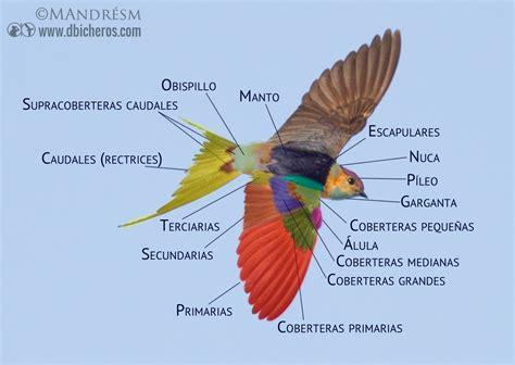 Los nombres de las plumas en 3 fotografías interactivas ...