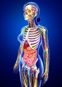 Los órganos del sistema nervioso | Salud y bienestar