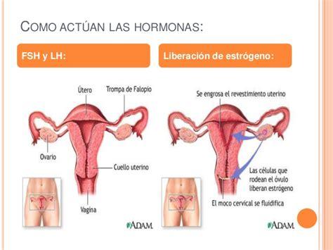 Los ovarios