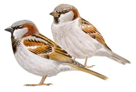 `Los pájaros anidan´, en el centenario de Gloria Fuertes ...