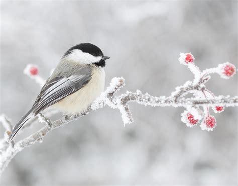Los pájaros de hábitats cambiantes tienen el cerebro más ...