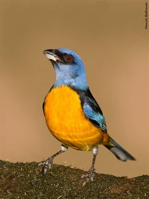 Los pájaros más bonitos de la Argentina [MEGAPOST] | Bird