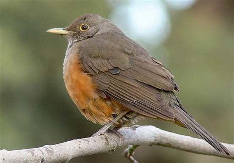 Los pájaros más bonitos de la Argentina [MEGAPOST]   Taringa!