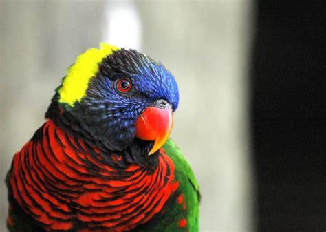 los pájaros más raros   Mascota Doméstica