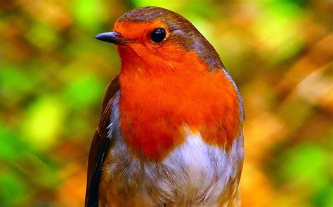 Los pájaros pueden ver los campos magnéticos de la Tierra