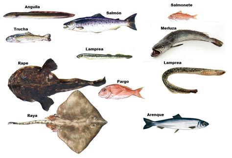 Los Peces Caracteristicas y Tipos de Peces