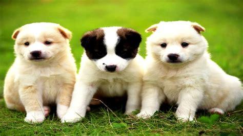 Los Perritos Mas Tiernos Lindos Chiquitos Bonitos ...