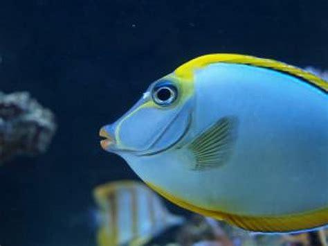 Los pescados de mar sobre los arrecifes de coral 1 ...