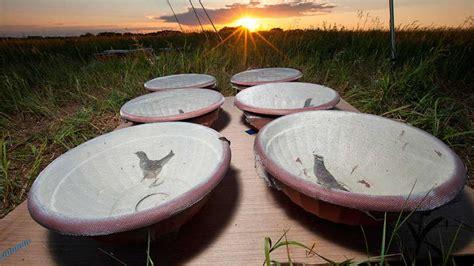 Los plaguicidas más comunes son tóxicos para los pájaros ...