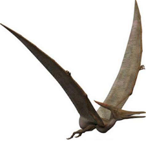 Los pterodáctilos aún siguen vivos   C.1040