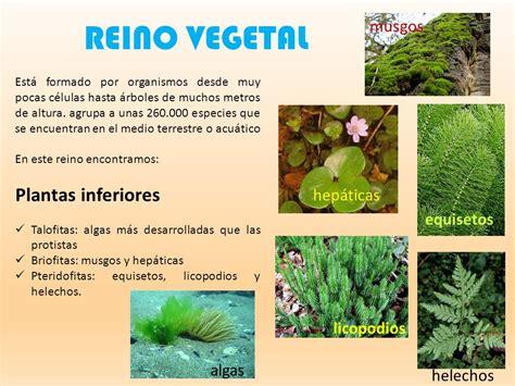 LOS REINOS DE LA NATURALEZA - ppt video online descargar