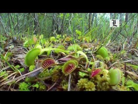 Los secretos de las plantas  Plantas carnívoras    YouTube