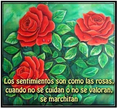 Los sentimientos son como las rosas   Cartas de amor y pasión