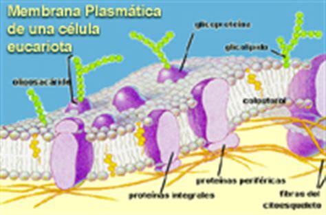 LOS SERES VIVOS: Eucariotas vs. Procariotas