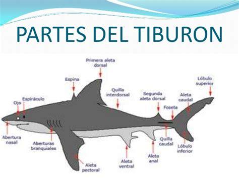 Los tiburones. Conferencia Guillermo G.V.