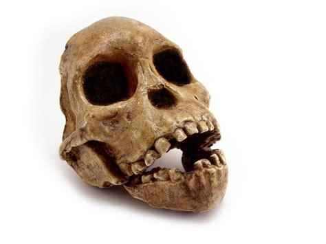 Los últimos descubrimientos arqueológicos | Curiosidades