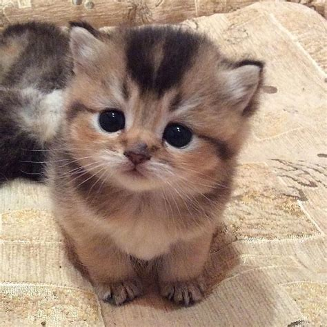 Love Cute Cats | Cat, Animal and Kitty