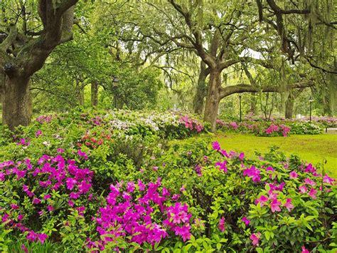 luffy wallpaper: Spring Garden wallpaper