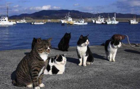 Lugares curiosos del mundo  Tashirojima, la isla con más ...