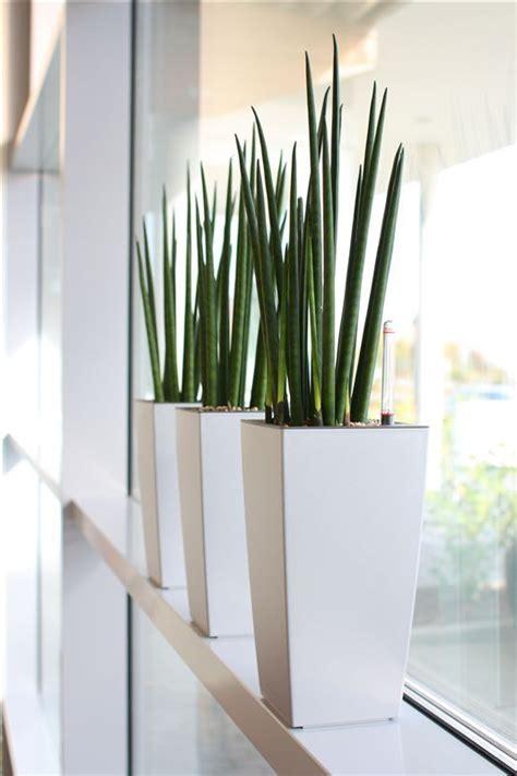 maceteros-y-plantas-gigantes-para-decoracion-de-interiores ...