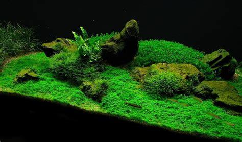 Macronutrients and micronutrients - Aquarium-fertilizer.com