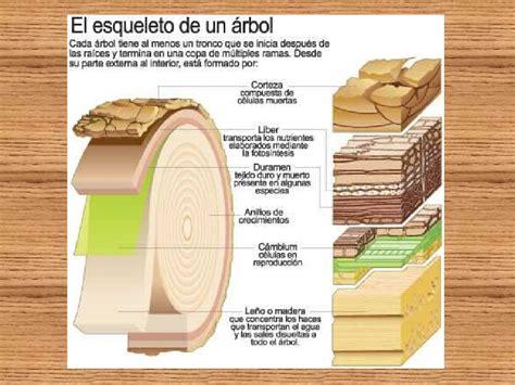 Madera y celulosa | woodcut | Pinterest | Madera, Troncos ...