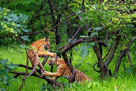 "Madhya Pradesh, la selva de ""El libro de la Selva"" | blog ..."