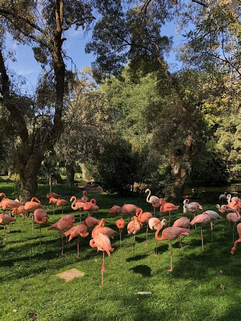 Madrid s Zoo and Aquarium: A Photo and Video Review ...