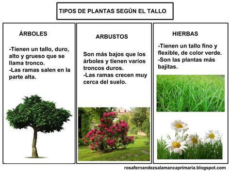 Maestra de Primaria: Las plantas. Partes de las plantas ...