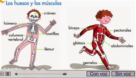Maestra de Primaria: Nuestro cuerpo. Huesos ...