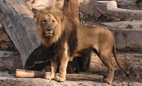 Mammals | Zoo Barcelona